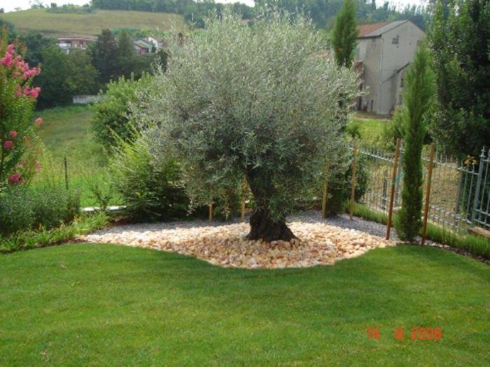 Tecniflor di smania adriano for Prato a zolle